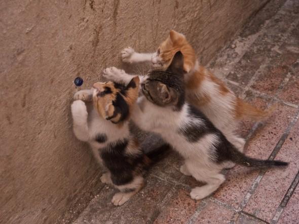 3 kittens in Essaouira