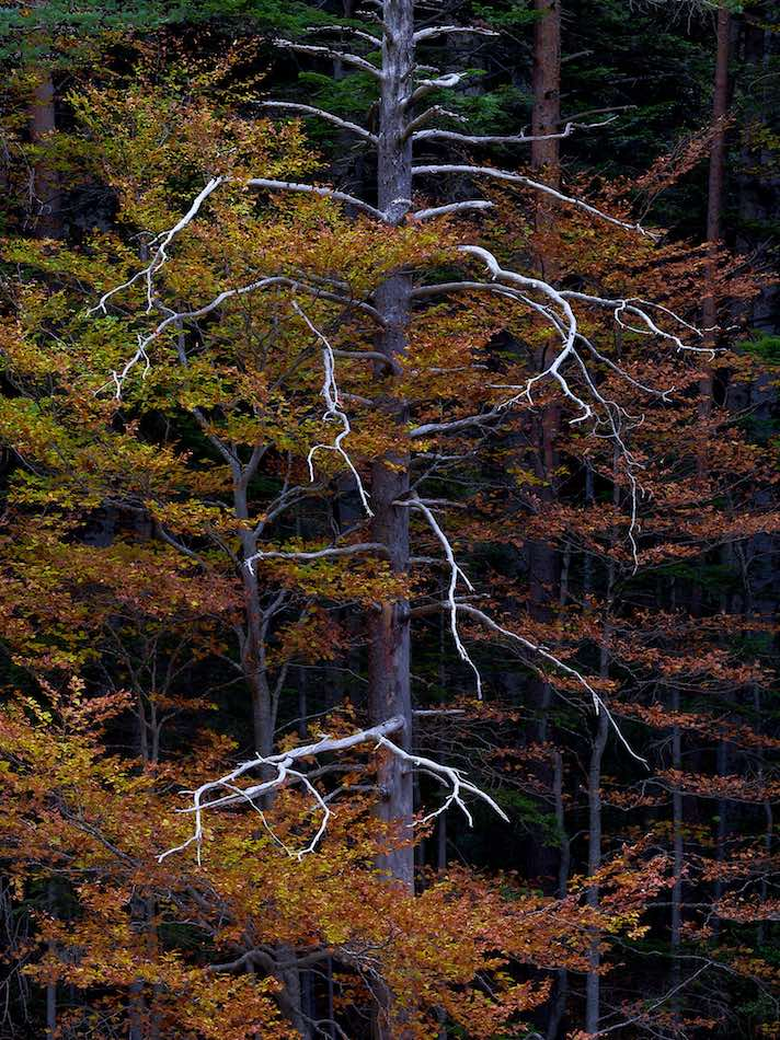 dying-tree-forest-in-spain