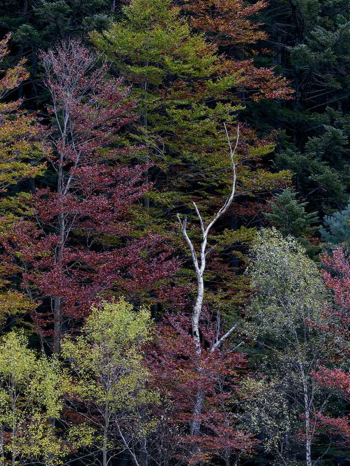 landscape-photography-tours-include-spain's-forests