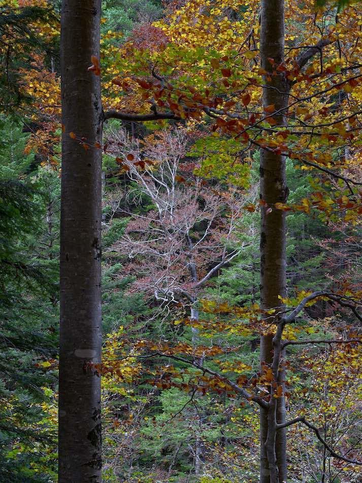 landscape-photography-tours-for-autumnal-colours