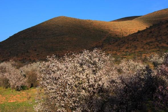 valley blossom
